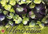 Himmlische Hortensien (Wandkalender 2018 DIN A4 quer): 12 wunderbare Hortensien Portraits (Monatskalender, 14 Seiten ) (CALVENDO Natur) [Kalender] [Apr 01, 2017] Cross, Martina