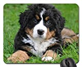 Gaming-Mauspads, Mauspad, Berner Sennenhund Dog Big Dog Animal Green