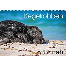 Kegelrobben ganz nah! (Wandkalender 2019 DIN A3 quer): Faszinierende Nahaufnahmen von Kegelrobben in ihrem natürlichen Lebensraum. (Monatskalender, 14 Seiten ) (CALVENDO Tiere)