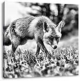 Monocrome, Schöner Fuchs, Format: 40x40 auf Leinwand, XXL riesige Bilder fertig gerahmt mit Keilrahmen, Kunstdruck auf Wandbild mit Rahmen, günstiger als Gemälde oder Ölbild, kein Poster oder Plakat