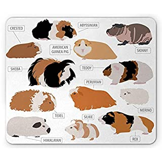 Guinea Pig Mouse Pad, Infographic Design Classification for Types of Rodent Breeds, Standard Size Rectangle Non-Slip Rubber Mousepad, Sand Brown Amber and Ginger 9.8 X 11.8 inch