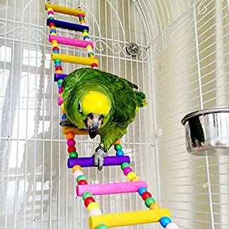 Gemini_mall® Wood Climbing Ladder Toy for Bird Parrot Budgie Parakeet Cockatiel Macaw African Grey Cockatoo Rat Gerbil Mice Chinchilla Guinea Pig Squirrel Cage Perch (31cm/12.2inch) Gemini_mall® Wood Climbing Ladder Toy for Bird Parrot Budgie Parakeet Cockatiel Macaw African Grey Cockatoo Rat Gerbil Mice Chinchilla Guinea Pig Squirrel Cage Perch (31cm/12.2inch) 51cD5XFpGrL