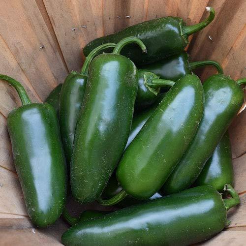 Jalapeno - 20 x Samen mittelscharfe Chili in 100% Natur-Qualität aus Portugal zum Grillen, Braten, Füllen - Massenträger der mexikanischen Küche
