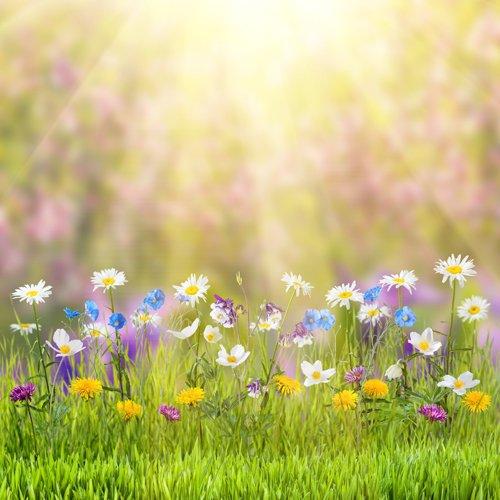 50cm frühling thema Ostern foto studio blume fotografie hintergrund gedruckt mit sonnenschein und gras D-9573 (Gras Fotografie-hintergrund)