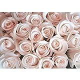 Vlies Fototapete PREMIUM PLUS Wand Foto Tapete Wand Bild Vliestapete - Blumen Rose Blüte - no. 185 Blumen Rose Blüten Natur Liebe Love Blüte Rosa, Größe:300x210cm Vlies