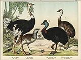 POSTERLOUNGE Forex 120 x 90 cm: Ostrich, Bustard,...