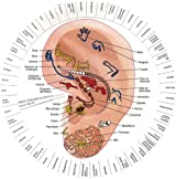 Le révélateur : Ressemblance oreille, foetus