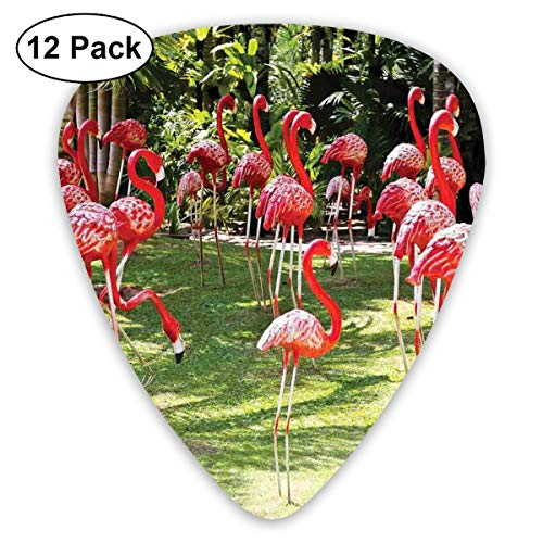 Celluloid Guitar Picks - 12 Pack,Abstract Art Colorful Designs,Flamingo Bird Model In The Garden In Vibrant Colors Under Sun Rays Shadows,For Bass Electric & Acoustic Guitars.