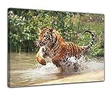 Bilderdepot24 Kunstdruck - Tiger im Sprung - Bild auf Leinwand - 80x60 cm - Leinwandbilder - Bilder als Leinwanddruck - Wandbild
