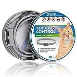 SCIROKKO Floh- und Zeckenhalsband für Katzen, Katzen, 8 Monate, 33 cm