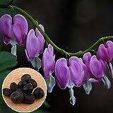 Auntwhale (10 Stück) Purse Peony Seed Purple