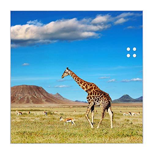 BANJADO Glas Magnettafel beschreibbar 50 x 50 cm groß   Memoboard mit 4 Magneten   Glastafel mit Motiv Giraffe   Pinnwand aus Glas magnetisch, Glas Magnettafel