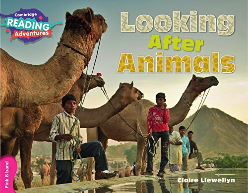 Looking after animals