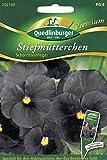 Schwarze Stiefmütterchen, Schornsteinfeger, Viola wittrockiana, ca. 25 Samen