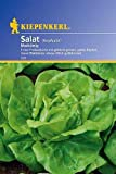 Salat Kopfsalat Maikönig