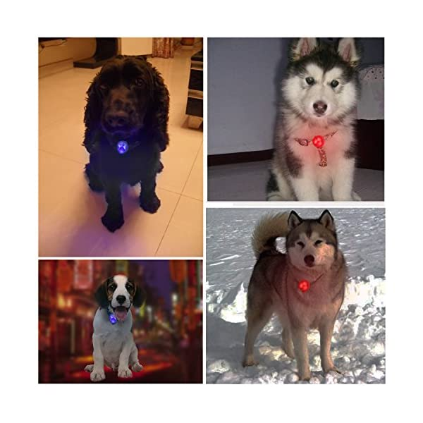 Top Munster Flashing SpotLit Cat / dog Collar Light,LED Pet Safety Light Luminous Pendant for Outdoor Safety (2 Pcs Red + Blue) 6