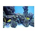 PVC Coral Aquarium Fond Poster sous-Marine Fish Tank décorations pour Murs Sticker Submarine Reef Pattern