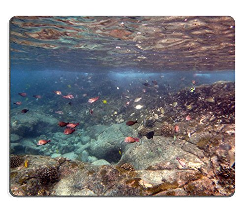 MSD Natural Rubber Mousepad IMAGE ID: 35027381 Fish of many colors including yellow Tang butterfly fish swim in the shallow waters off the coast of the big Island Hawaii