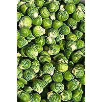 PlenTree Coles de Bruselas, col de Bruselas, 520 semillas!