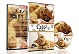 Family Pet DVD - Cat TV - Entertain your Pets with Stimulating Images of Cute Little Animals with Natural Sounds