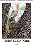 Tiere Ecuadors (Wandkalender 2019 DIN A2 hoch): Die faszinierende Tierwelt Ecuadors (Monatskalender, 14 Seiten ) (CALVENDO Tiere)