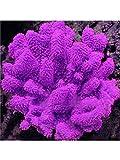 Yukio Samenhaus - 1000 Stück Grassamen fürs Aquarium/Teich/Pool Decor Wasserpflanze, Aquarien-Pflanze, pflegeleicht schnellwachsend