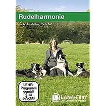 Rudelharmonie nach HundeTeamSchule: Führen eines Hunderudels