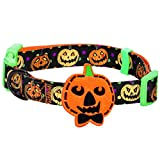 Blueberry Pet Halloween Harvest Pumpkin Classic Designer Dog Collar with Decoration, Neck 37cm-50cm, Medium, Holiday Collars for Dogs