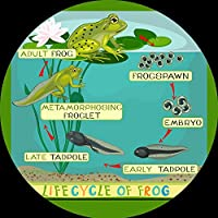 Be-Active Large FROG LIFE CYCLE Circular Playmat - A fun addition to the bedroom, nursery or classroom (88 x 88cm)