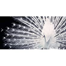 El Arte Grupo Tim Flach (noviazgo) – Lámina Decorativa (50 x 100 cm