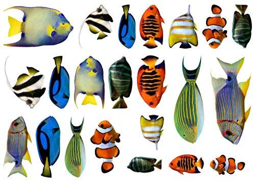 Samunshi® Fischaufkleber Set Aufkleber 22 teiliges Set Sticker Mehrfarbig - Fisch-aufkleber Heckscheibe