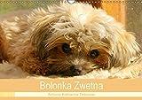 Bolonka Zwetna 2018 (Wandkalender 2018 DIN A3 quer): Anschaulich, liebevoll und kreativ wurde hier der beliebte Zarenhund in Szene gesetzt ... [Apr 13, 2017] Katharina Tessnow, Antonia