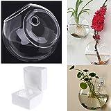 Jiamins vetro vaso per fiori da appendere alla parete rotondo vaso Decor terrario idroponica acquari pianta in vaso da fiori, Vetro, Transparent, Diameter 12CM