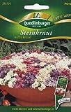 Steinkraut, Bunte Kissen