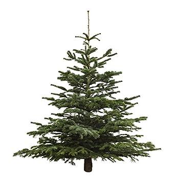 Dominik Blumen Und Pflanzen, Weihnachtsbaum Nordmanntanne, Ca. 165 - 180 Cm Hoch, Geschlagen 0