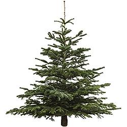 echter weihnachtsbaum nordmanntanne h ca 165 180 cm. Black Bedroom Furniture Sets. Home Design Ideas