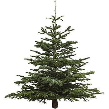 echter weihnachtsbaum nordmanntanne h he ca 150 175 cm. Black Bedroom Furniture Sets. Home Design Ideas