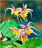 BALDUR-Garten Epimedium