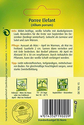 Lauchsamen – Porree Elefant von Quedlinburger Saatgut