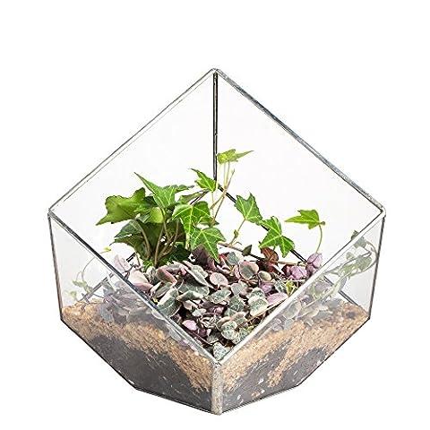 15cm carrés inclinés Open Cube Géométrique Terrarium en verre transparent boîte de table Plante Fougère Mousse Argent