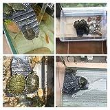 masterein Schildkröte Basking Reptile Plattform Tank Aquatic Wasser Rock Leiter Basking Insel Climb