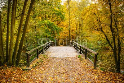 "Alu-Dibond-Bild 90 x 60 cm: ""Bridge in autumn forest"", Bild auf Alu-Dibond"