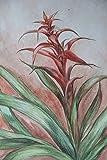 original Aquarell Bromelie mit roter Blüten - gerahmt in weißem Holzrahmen 19x28cm