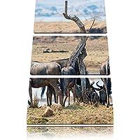 Cape Buffalo mandria Savannah immagine 3 pezzi