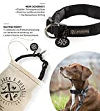 Hundehalsband Balu Neopren gepolstert - Hunde Halsband Jack & Russell div. Größen und Farben (Halsumfang S (28-35 cm), Schwarz)