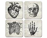 Echthaar Anatomie–Set aus 4Untersetzern 1/10,2cm Dick sehr hohe Qualität menschlichen Anatomie Prints, Vintage Skelett Illustration