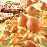 UPSTONE Gartensamen - Steckzwiebeln Samen 'Echte Stuttgarter Riesen', mit pikant - kräftigem Aroma Speisezwiebel Samen Gemüsesaatgut für Garten Balkon/Terrasse