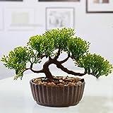 BAIXUE Künstliche Blume 1 stück Begrüßung Kiefer Bonsai Simulation Dekorative Blume + Vasde Künstliche Blumen Gefälschte Grüne Topfpflanzen Hochzeit Wohnkultur - A1