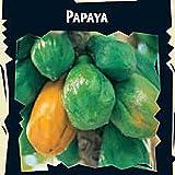 T & M Melonenbaum (Papayabaum)