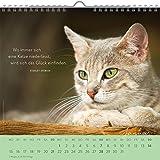 Für Katzenfreunde 2018: Dekorativer Wandkalender mit Monatskalendarium | Maße (BxH): 21x20cm